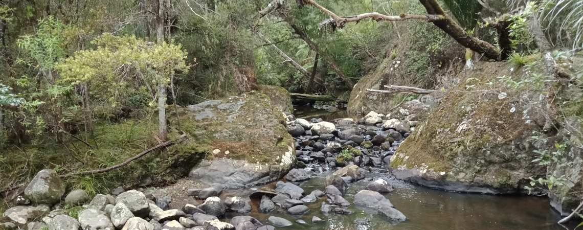 Forest and stream landscape at Wairere, Northland, NZ